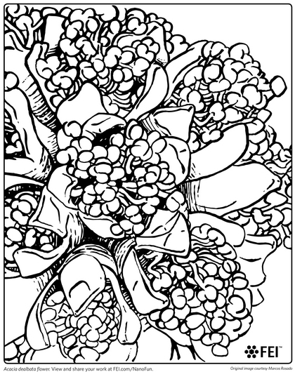 Download This Coloring Sheet