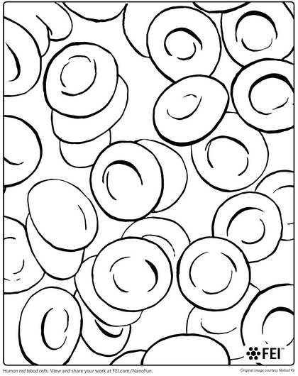 types of cells coloring pages - photo#33