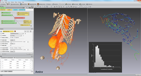 amira 3d software for life sciences fei